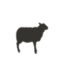 צללית כבשה בעיגול לדף צאן