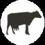 צללית פרה בעיגול לרפת