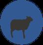 עיגול כחול עם כבשה צאן ש.ח. מהנדסים ויועצים